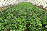 農業の温室の反昆虫のネット