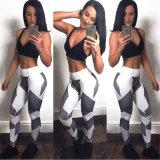Les guêtres de sports de mode étirent le pantalon serré maigre pour les vêtements du femme