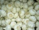 Supplier dorato di Pure White Garlic in 10kg Carton