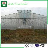 다중 경간 야채 또는 정원 또는 꽃 또는 농장 플라스틱 온실