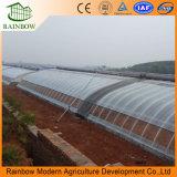 China Aquaponic automatiseerde de Serre van de Zonne-energie