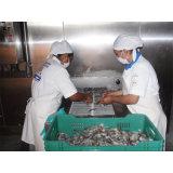 Réfrigérateur à congélation rapide en spirale pour filets de poisson congelés ou crevettes