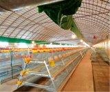 Système d'un jour de matériel de cages d'oiseau de poulet de ferme avicole neuve (un type bâti)