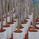 Tessuto non tessuto dei pp Spunbond per sacchetto del seme del Seedbed del fiore della pianta il crescente