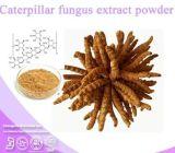 100% естественное Yarsagumba Extract, Cordyceps Sinensis Extract (полисахариды 10%~40%)