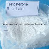 Testostérone cristalline blanche Enanthate d'Enan 315-37-7 d'essai de stéroïdes de bâtiment de muscle de poudre