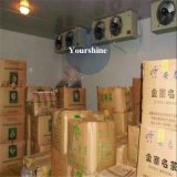 중국에 있는 차를 위한 중간 크기 저온 저장 또는 서늘한 방