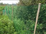 Réseau net de cerfs communs de réseau d'Anti-Oiseau de jardin