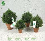 Piante artificiali materiali del PE di verde dei bonsai di Roundball per la decorazione