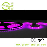 Usine de Shenzhen RoHS approuvé ce gros 5M 5050 Violet Bande LED