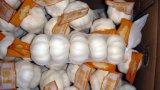 Nuovo aglio di bianco di buona qualità dell'esportazione del raccolto