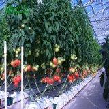 Овощной выбросов парниковых газов для посева томатов и огурцов, баклажаны.