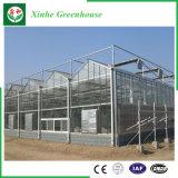 Invernadero de cristal de Venlo de los sistemas de control del fabricante de China para las flores