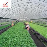 Agricultor trabalhando em casa de vegeta o em óleos vegetais
