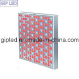 GIP Red Blue 45W LED Grow Lights für Garten Greenhouse