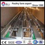 H-type Cage Multi-Tier Couche de la volaille pour la vente de matériel agricole