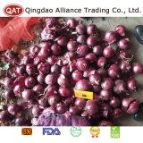 Высококачественные свежие красный лук для экспорта