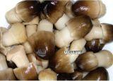425g konservierte abgezogenen Stroh-Pilz mit bester Qualität in Büchsen