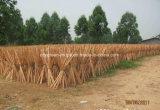 الصين [منوفكتثرينغ كمبني] خشبيّة ممسحة مقبض