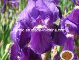 Китайское травяное 5:1 выдержки Anemarrhena Asphodeloides микстуры - 20: 1