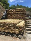 Natur trockener gerader Tonkin Bambus-Stock