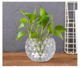 Vaso di fiore idroponico di vetro europeo