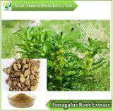 Astragalus Extracto de raíz, el polvo de 10: 1