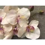 Невеста цветет гибридная орхидея фальшивки цветка украшения венчания