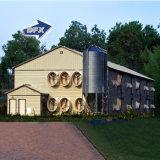 Granja avícola industrial de la vertiente de la estructura de acero del edificio de marco de acero