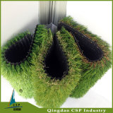 チンタオから成っている庭のCarprtの自然な草