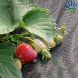 [Fabrik-] Landwirtschafts-nichtgewebtes Garten-Gewebe
