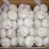 Supplier professionale di Fresh White Garlic