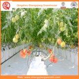 Agriculture / Tunnel commercial de film plastique Maison verte pour fraise / Rose