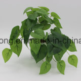 훈장을%s 실제적인 접촉 토란과 덩굴 식물
