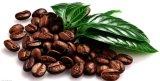 Il caffè di forma fisica completa il meglio perde il peso che dimagrisce il caffè