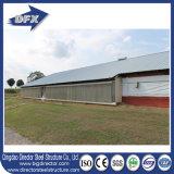 鶏のためのEconomic Designチンタオディレクター鉄骨フレームの農家の養鶏場の家