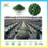 Heißer Verkaufs-und Qualitäts-Chlorella-Wachstum-Faktor