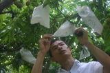 Pp.-Pflanzenfrucht schützen Beutel