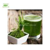 ماء صاف طبيعيّ - [سلوبل] عضويّة قمح عشب عصير مسحوق