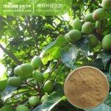 Estratto verde oliva naturale del foglio di 100%