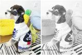 Commerce de gros adorable lapin Pet de nouvelle conception produit pullover Chien Chat Chien vêtements mode Pull