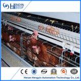 Couche de poulet avec système de cage buveur automatique