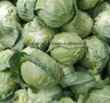 신선한 채소 중국 백색 또는 자주색 양배추