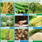 농업 비료를 위한 칼륨 황산염 빵조각 칼륨 황산염