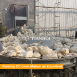 Het landbouwbedrijfontwerp van het grote schaalgevogelte en het type van H automatische grill het grootbrengen kooi voor verkoop