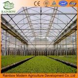 Invernadero industrial Multi Span con sistema hidropónico