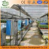 농업 강철 구조물 유리제 식물성 온실