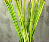حقيقيّ لمس يزهر [بو] ينمو خضراء إلاهة زنبقة اصطناعيّة [بو] [كلّا] [لّيلي] لأنّ [ودّينغ برتي] زخرفة