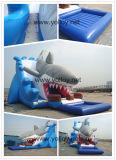 Trasparenza di acqua gonfiabile dello squalo gigante di Commerical per gli adulti ed i capretti sulla vendita