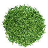 La Chine Le thé vert pour le monde